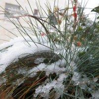 Первый снег. :: Жанна Викторовна