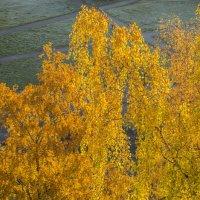 Осень. Вид из окна. :: shvlad
