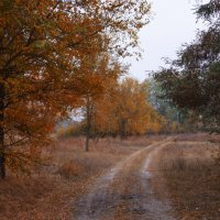 Каждый из нас решает сам, чем будет для него эта осень - унылая пора, или очей очарование... :: Ксения Довгопол
