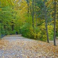"""""""Шуршащие листья, осколками лета, уснут на земле в этом парке чудес..."""" :: Galina Dzubina"""