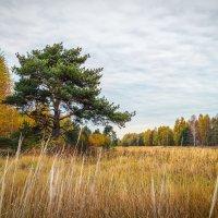 Цвет осени 5 :: Андрей Дворников