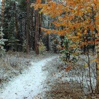 Лесной теряет силы листопад... :: Лесо-Вед (Баранов)