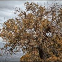 Одинокое дерево в горах :: Олег Фролов