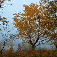 Осень... :: Петр Заровнев