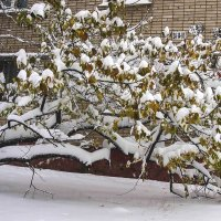 Деревья поникли от снегопада :: Николай Сапегин
