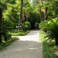Сухумский ботанический сад :: pich