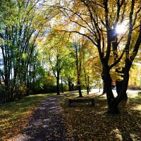 Осеннее солнышко ... :: Владимир Икомацких