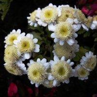 Цветы :: Вера Щукина