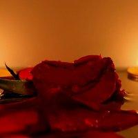 романтика :: КАТЕРИНА ЖДАНОВИЧ