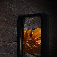 про цветы :: Ирина Елагина