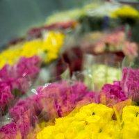 цветов много не бывает :: Мария Корнилова