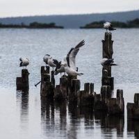 птичьи посиделки :: Наталья Литвинчук