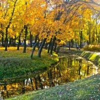 золото осени :: Елена