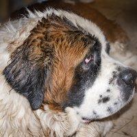 Мокрый пес... :: Ирина Рассветная