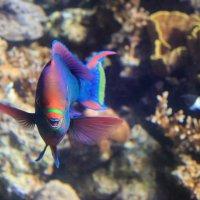 эйлат подводная обсерватория :: Марк Бабич