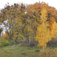 Осень золотая к нам пришла давно, Я забыть пытаюсь летнее тепло... :: Татьяна