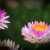 Цветок жизни :: юрий Амосов