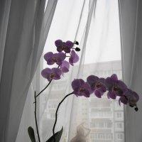 Утро... :: nika555nika Ирина