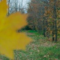 А вот и осень! :: Julia Martinkova
