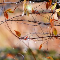 Осень плачет :: Валерий Лазарев