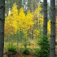 Осенний лес :: Милешкин Владимир Алексеевич