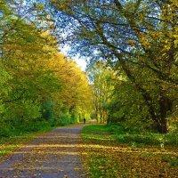 Эта Осень... так сводит с ума,  Согревая своей теплотою... :: Galina Dzubina