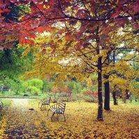 Осень в городе :: Катерина Попович