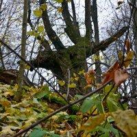 Чудо-дерево. :: Oleg4618 Шутченко
