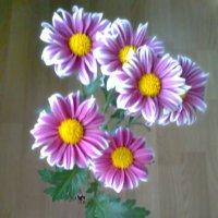 Мои хризантемы. :: Владимир