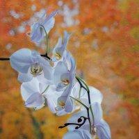 Порхающие бабочки и осень :: Ирина Приходько