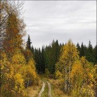 Дорога в Осень :: Александр Потапов
