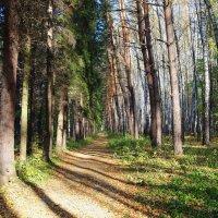прогулка по лесу :: megaden774
