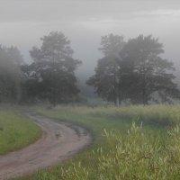 Сосны в тумане :: pugar4750 Юрий Пучков