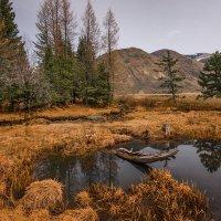 весеннее болотце... :: Наталья Маркова