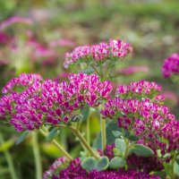 Осенние цветы :: Виталий