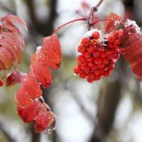 Мокрый снег :: Ната Волга