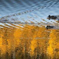 Над осенью :: Константин Фролов