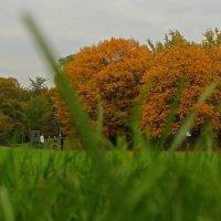Осень сквозь траву :: Alexander Andronik