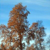 Золотая осень :: Валентин Когун