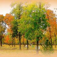 В осеннем парке. :: Лариса Авдонина