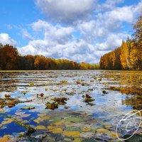 на озеро спустилось осень :: Gintautas Tiška