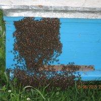 Пчелкам было жарко ! :: Татьяна ❧