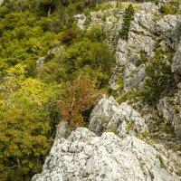 Одинокое дерево :: Gennadiy Karasev