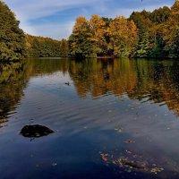 на озере... :: igor G.