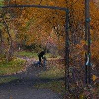 Осень в парке :: Дмитрий Лебедихин
