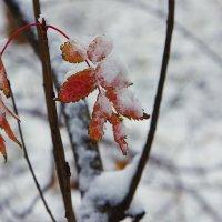 Первый снег. :: Сергей Калиновский
