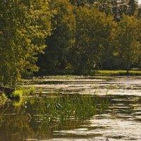про изящное болотце :: mig-2111 Новик