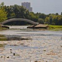 незатейливая жизнь старинного пруда :: mig-2111 Новик