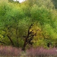 На пурпурной перине :: Aleksandra Rastene