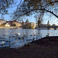 Жизнь в городе :: Ольга